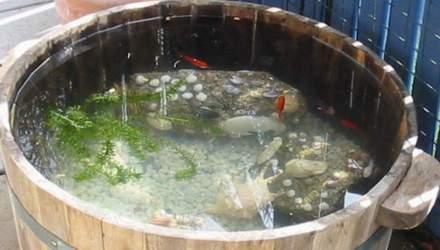 Koiteich for Goldfische teich winter